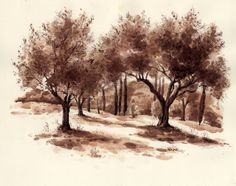 Olive Trees by the City's Wall Viterbo, Italy Fred Lynch