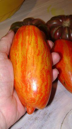 Saving Seed From Heirloom Tomatoes