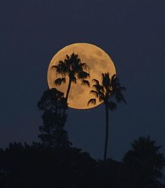 San Diego Scenic Photography  -  Supermoon over San Diego this evening