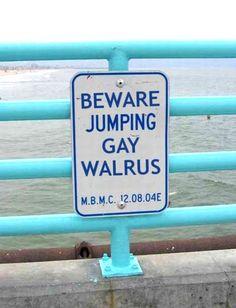 Beware Jumping Gay Walrus