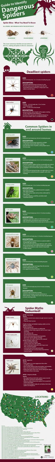 Guide to identify dangerous spiders