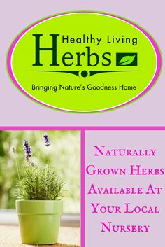 Healthy Living Herbs - Naturally Grown Herbs Available At Your Local Nursery