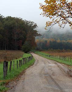 If I ever end up in a house on the edge of the woods down an old dirt road, I will be one happy person.