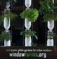 Window Gardening - for dem uden altan