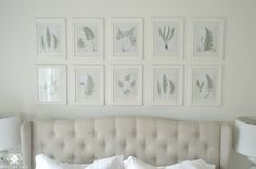 Botanical Art Gallery Wall Above Tufted Bed fter searching online for free botanical images, I decided on the fern prints I found on The Painted Hive. Once I downloaded them, I toned down the green a bit. I love the vibrant color but thought it would be best in a muted tone for this bedroom. Printed on regular lightweight copy paper, I went to Michaels while they had frames on sale and scored 10 11×14 frames for just over $50. Now