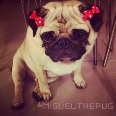 17731773:        I think Mum wanted a girl pug. She's been calling me Miguelina.