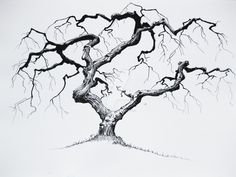 Tree drawn in pen