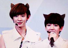 Kitty Chanyeol & Baekhyun (gif) so cuuute! X3