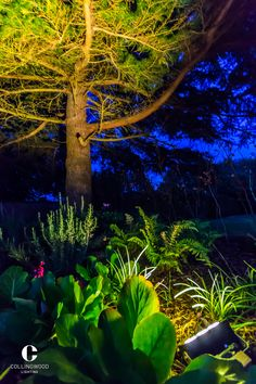 LED lighting from Collingwood enhances architecture and landscapes with long life, energy efficient illumination. Master light with the leaders in integrated LED lights Garden Lighting Inspiration, Design Inspiration, Energy Efficient Lighting, Walkway, Lighting Design, House Design, Led, Lights, Spotlight