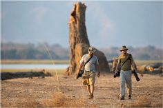 Zimbabwe, wedged between Botswana and Mozambique, is a dream destination for walking safaris.