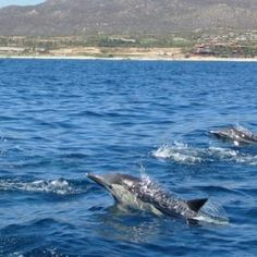 A school of dolphins near Cabo Mexico