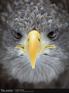 Eagle=Awesome