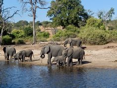 Chobe River, Botswana Bass Boat, Victoria Falls, Fishing Lodges, Safari, Elephant, African, Tours, River, Island
