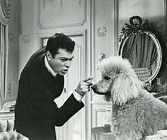 Tony Curtis is clearly dealing with stubborn poodle!