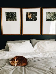 The Triptych gallery wall that's easy as a cat nap. It comes with a life-sized hanging guide, and is perfect above a King bed, over a couch, or a dining room table. Order in 5, hang in 10. Yes, really.
