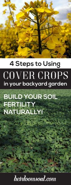 How to Cover Crop Your Backyard Organic Vegetable Garden in 4 Steps | Heirloom Soul | heirloomsoul.com