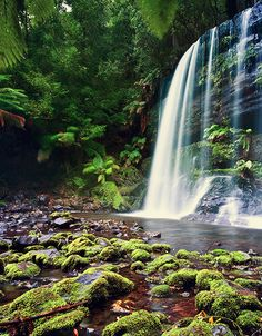 Tasmania, Australia: Russell Falls one of our many National Parks. What A Wonderful World, Amazing Pictures, Continents, Waterfalls, Wonders Of The World, Exploring, National Parks, Landscapes, Journey