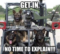 Three military working dogs ready for action. From Kevin Hanrahan's Military Working Dogs best photos of the year. Military Working Dogs, Military Dogs, Military Humor, Police Dogs, Military Service, Military Jeep, Humor Animal, War Dogs, German Shepherd Dogs