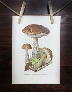 "Original German Botanical Book Plate Print Illustration Lithograph Fungi Mushrooms ""Birken-Roehrling"" Vintage Wall Art Decor Antique Dining"