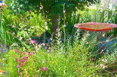 2014 BBY - Linda's garden - a haven for beneficials Garden Crafts, Plants, Plant Sale, Backyard Garden, Master Gardener, Ornamental Plants, Garden Tours, Backyard