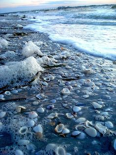 Sanibel beach shells at dusk, Sanibel Island, Florida.