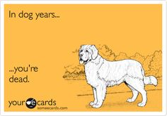Free and Funny Birthday Ecard: In dog years.you're dead. Create and send your own custom Birthday ecard. Birthday Greetings For Boyfriend, Birthday Message For Boyfriend, Birthday Wishes For Her, Funny Happy Birthday Wishes, Birthday Quotes For Daughter, Birthday Blessings, Best Friend Birthday, Sarcastic Birthday, Husband Birthday