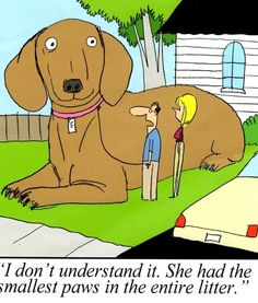 Dog Humor, Funny Dogs, Dachshund, Scooby Doo, Family Guy, Guys, Fictional Characters, Amor, Dachshunds