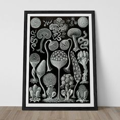 Ernst Haeckel Print - Nautical Print Antique Nature Print - Mycotozoa - High Quality Giclee Print - Beach House Decor Jelly Fish Wall Art