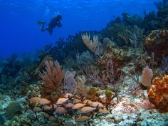 Angel Fish Cayman Brac #scubadive