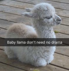 getsoktcom hilarious animal memes most pics the 21 The Most Hilarious Animal Memes 21 Pics You can find Cute animals and more on our website Funny Animal Jokes, Cute Funny Animals, Funny Cute, Funny Humor, Cute Animal Humor, Hilarious Memes, Hilarious Sayings, Funny Dogs, Dog Humor