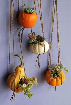 Mini Pumpkin Planters --> http://www.hgtvgardens.com/decorating/pumpkin-decorating-ideas-no-carve-options?s=3&?soc=pinterest
