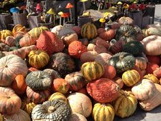 Pumpkins and gourds at Roger's Gardens in Corona Del Mar.