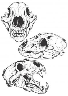 Bear Skulls vector illustration Illustration ,You can find Skull illustration and more on our website. Skull Animal, Animal Skull Drawing, Bear Skull, Dog Skull, Skull Art, Animal Drawings, Animal Skull Tattoos, Skeleton Drawings, Creepy Drawings