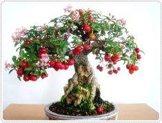bonsai fruit tree - Pesquisa Google