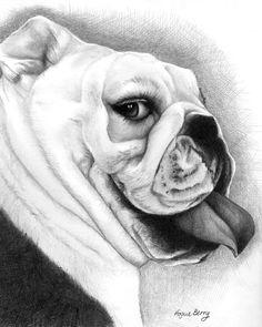 Bull Dog, Bullie, Dog, Pencil Portrait