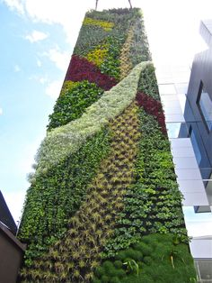 An incredible vertical 'wall' of flora (plants, grass, etc.) at an office building in Cochabamba.
