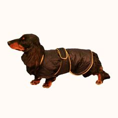 Quilted Winter Dog Coat with Tummy Panel