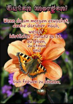 Guten morgen German Quotes, Morning Greetings Quotes, Kauai Hawaii, Animals, Smileys, Interiordesign, Oceans, Room Interior, Google Play