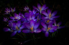 *Spotlighted Spring* by Ralf Thomas on 500px.