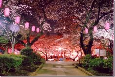 Cherry Blossoms in Toyko, Japan  A must see per my mom, want to go there and see them for myself.