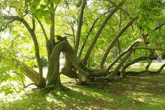 Afbeeldingsresultaat voor foto's van omgevallen bomen