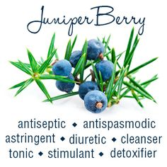 Juniper Berry Essential Oil-AromaTools #modernessentials