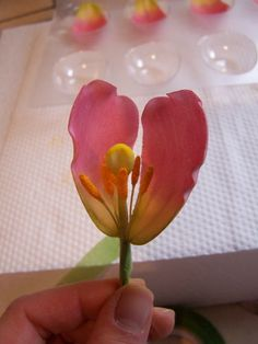 Gumpaste Tulip Tutorial - by Tea Party Cakes @ CakesDecor.com - cake decorating…
