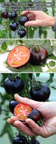 Black tomatoes.