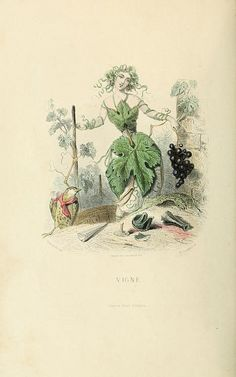 THE FLOWERS PERSONIFIED (1847) Images by the great Parisian cartoonist J.J Grandville from his Les Fleurs Animées