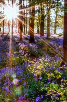 Sun Rays, Nature Scenes, Forests, Simply Beautiful, Allah, Nature Photography, Country Roads, Paintings, Adventure