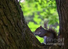 Afternoon Snack 4 by Alex Art Afternoon Snacks, Squirrel, Wall Art, Gallery, Cute, Animals, Awesome, Animales, Roof Rack