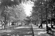 שדרות רוטשילד 1938