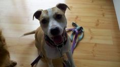 RUBY is an adoptable Terrier Dog in Marion, IN. A LITTLE BIT ABOUT ME! 2/16/12: HELLO, MY NAME IS RUBY! I AM A BEAUTIFUL GIRL OF APPROXIMATELY 1 1/2 TO 2 YEARS OLD! I AM YOUNG AND FULL OF ENERGY AND J...