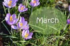 A Bumblebee´s Journey: Top 5 of March - Monthly favorites